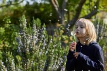 Girl In Allotment Garden Blowing A Blowball