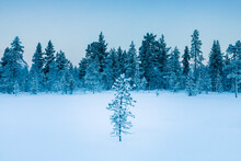 Winter Landscape With Trees, H...