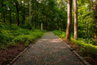 summer park outdoor landscape scenic view nature photography with stone paved road for walking and promenade in clear weather July day time with a lot of green foliage on a tree
