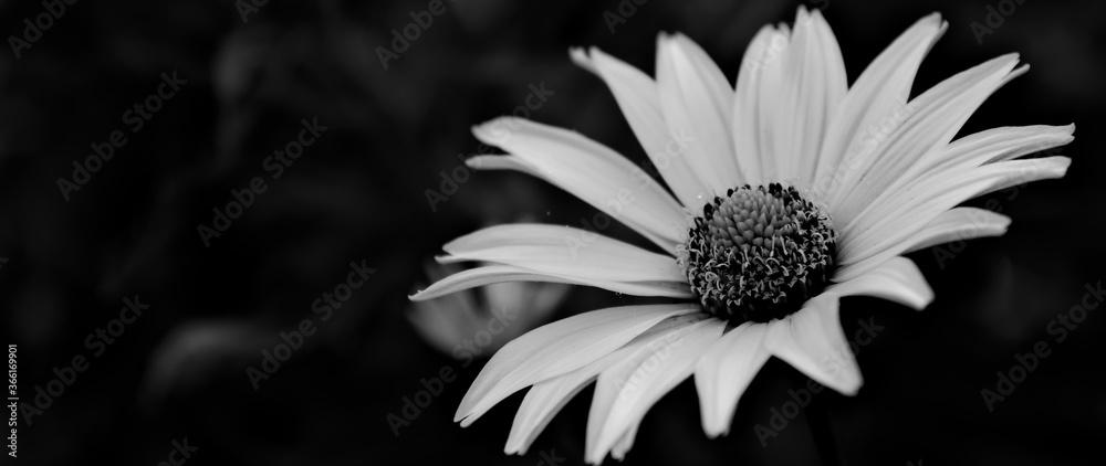 Fototapeta モノクロの小さな花のクローズアップ