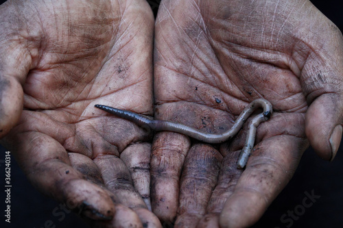 Valokuvatapetti earthworm on muddy soil hands of a labourer worker close up