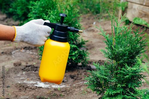 Obraz Garden sprayer bottle in female hand sprinkles thuja tree. Insect protection concept. - fototapety do salonu