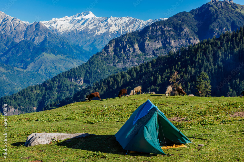 Tent in Himalayas mountains with flock of sheep grazing. Kullu Valley, Himachal Pradesh, India
