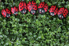 A Row Of Painted LadyBug Friendship Rocks On Green Plant Background