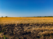 Wheat Field After Harvest On A...