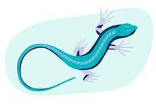 Blue Lizard Vector Illustration. Reptile With Long Body And Tail, Four Legs And Blue Skin. Design For Poster, Web Site.