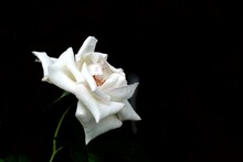 In Selective Focus A Single Wh...