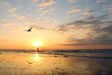 Beach At Sunrise With Seagulls...