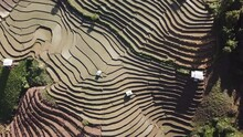 Top View Terraced Rice Field A...