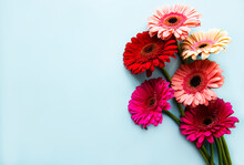 Bright Gerbera Flowers On A Bl...