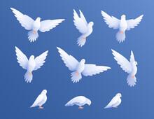 White Pigeons Doves Set