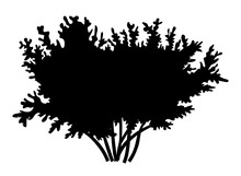 Silhouette Bush With Leaves Isolated On White Background. Lush Wide Bush Several Thick Branches Wide Crown. Decorative Vegetation Of A City Park Or Garden, Forest Plant Outlines Vector Illustration