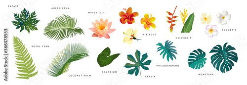 Set of vector realistic tropical leaves and flowers with names isolated on white background. Artistic botanical illustration #366478553