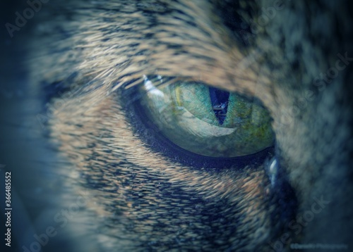 Photo Katzen Auge