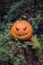 Halloween Pumpkin With Fiendish Smile On Scary Trunk In Forest. The Orange Selfmade Halloween Symbol Is Sitting Between Green Autumn Nature. Mystery Scene On Ocober 31st
