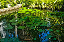Tropical Pond With Water Lilies. Bright Green Leaves Lie On The Mirror Surface Of The Water, Flowers Rise. Grass All Around. Palm Trees And A Mysterious Tower Are Reflected In The Water. Thailand
