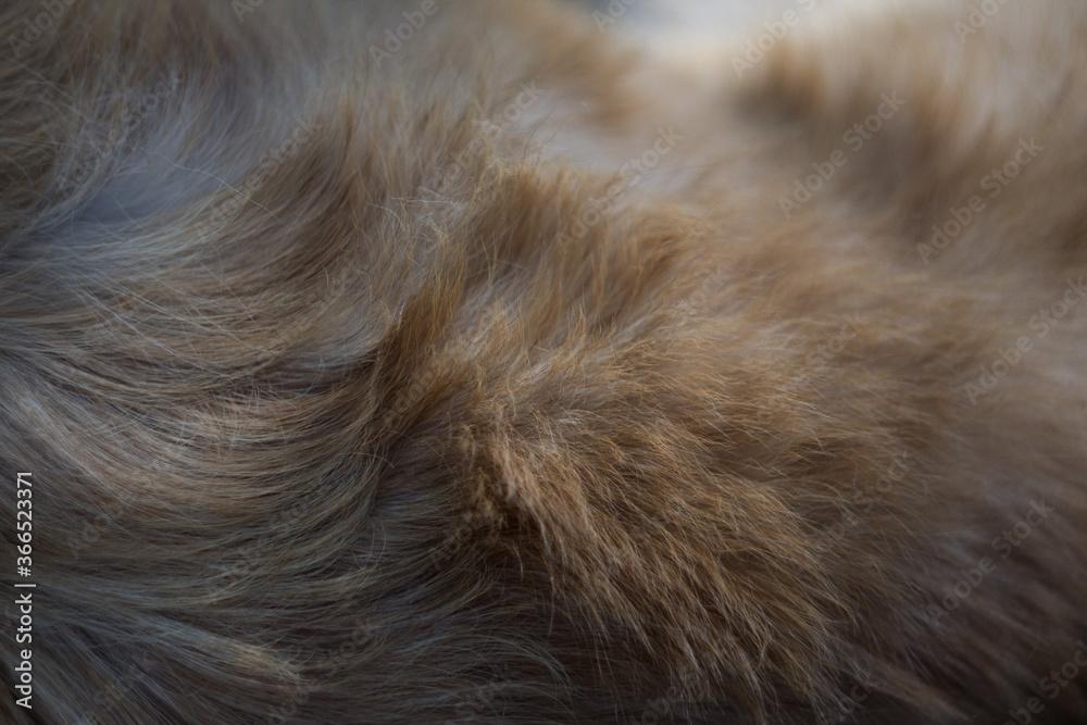 Fototapeta close up of fur