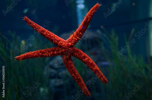 starfish in the aquarium