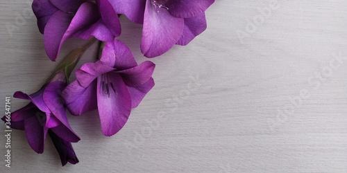 Fotografering tavolo bianco con fiori viola aperti