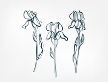 Flower Iris Line One Art Isolated Vector Illustration