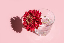 A Glass With Water And Deep Red Flower Dahlia On Pink Background. Minimal Flowers Concept In Hard Light With Shadows. Art Design. Front, Top View, Soft Focus.
