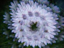 Wreath Of Purple African Daisy...