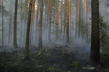 A large area of ​​the forest is on fire. Volunteer firefighters extinguish fires