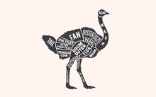 Ostrich. Butcher Guide Scheme. Ostrich Chart. Vintage Retro Print, Ostrich Silhouette, Old School Style. Poster For Butchery Meat Shop, Restaurant, Kitchen Wall Design, Typography. Vector Illustration