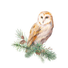 Watercolor Christmas Tree Branches With Owl. Hand Painted Animal Illustration Isolated On White Background. Merry Christmas Card