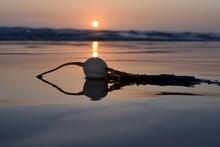Selective Focus Of A White Sea...