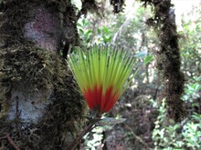 Photo Of Dendrophthoe Or Kemladean Flower In The Jungle