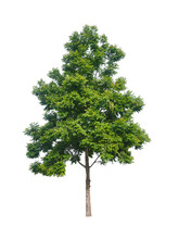 Isolated Tree With Clipping Pa...