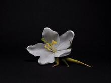 Jasmine White Flower/ Gardenia...