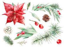 Watercolor Christmas Plants Set. Hand Drawn Green And Red Botanical Elements Isolated On White Background.