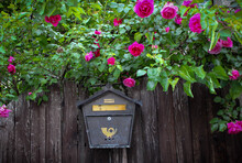 Old Mailbox On A Wooden Fence Surrounded By Pink Roses