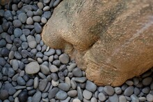 Natural Stones Which Are Deliberately Stocked As Decoration Cover The Area Around The Trunk Of A Large Tree