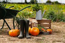 Autumn, Harvest Time. Composition With Metal Watering Can, Green Garden Truck, Wooden Case With Ripe Orange Pumpkins, Carrots, Rubber Boots. Rustic Decor, Fall Inspiration. Close Up, Outdoors