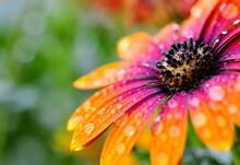 Kappkörbchen Nach Dem Regen