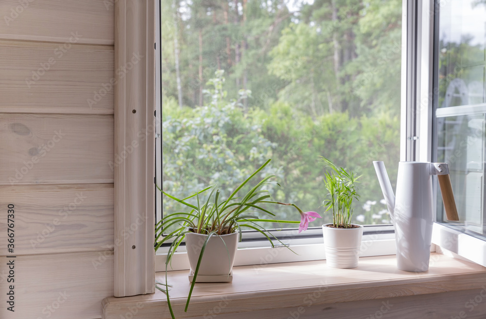 Fototapeta White window with mosquito net in a rustic wooden house overlooking the garden. Houseplants and a watering can on the windowsill.