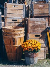 Old Wooden Crate With Autumn Flowers