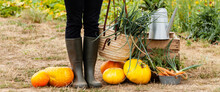Autumn, Harvest Time. Composition With Farmer Girl In Rubber Boots, Metal Watering Can, Wooden Case, Orange Pumpkins, Carrots. Rustic Decor, Fall Inspiration. Banner
