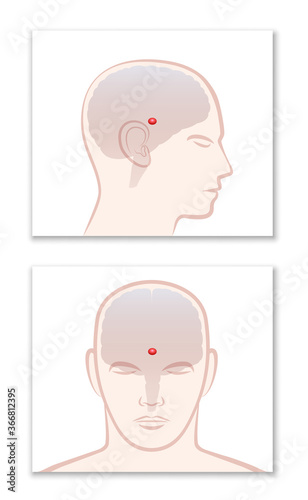 Obraz PINEAL GLAND or THIRD EYE. Lateral and frontal view with position in the human brain. Isolated vector graphic illustration on white background.  - fototapety do salonu