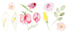 Set Of Watercolor Pink Floral Elements And Leaves. Wedding Concept. Calla Lilies, Peas, Mimosa, Rose, Rose Hips. Invitation. Hand Drawn Watercolor Arrangements For Greeting Card Or Invitation Design