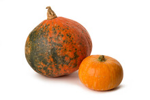 Pumpkin Ripe Isolated On White Background.