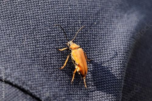 Photo mały  brązowy  owad  na  niebieskim  tle