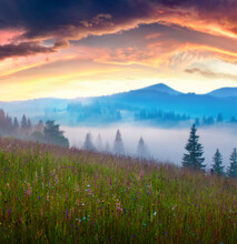 Foggy Summer Sunrise In The Mo...
