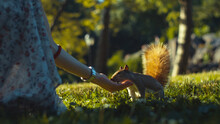 Young Girl Feeding A Squirrel,...