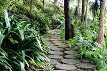 Un Camino De Piedra En Un Bosq...