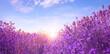 Sunlit lavender field under blue sky, banner design