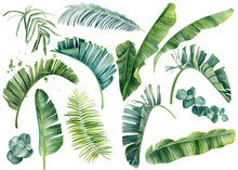 Tropical Set Of Plants On A Wh...